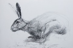 Passing on a March morning-Hare-pencil-14-x-18-cm.-